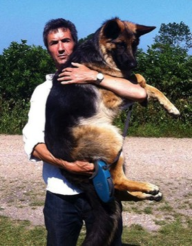 Photograph of Guy Callaby with Jess the dog